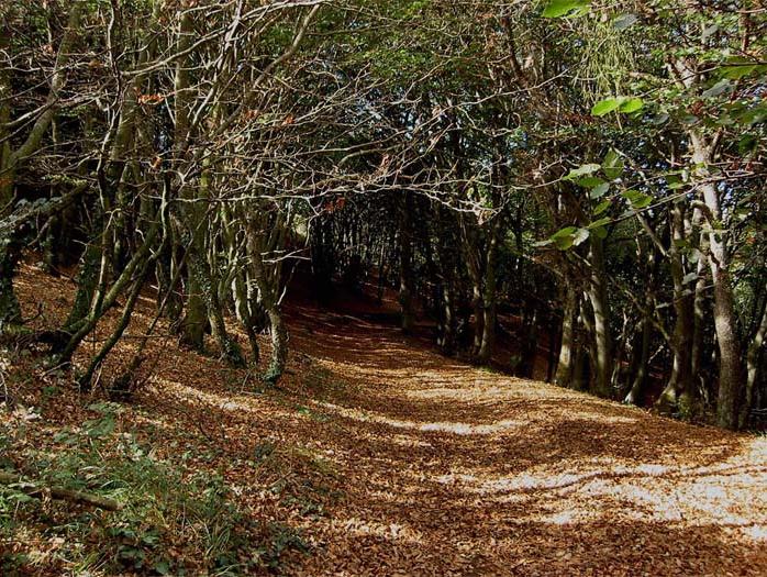 Zaldiaran Camino De La Cumbre