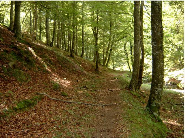 Vallegrull Bosque Hayas